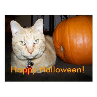 Orange Cat With Pumpkin Postcard