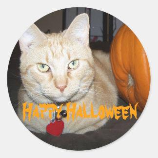 Orange Cat With Pumpkin Round Sticker
