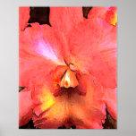 Orange Cattleya Orchid Poster