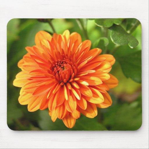 Orange Chrysanthemum Mousepad