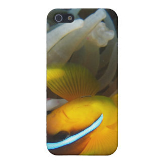 Orange Clown Fish Case For The iPhone 5