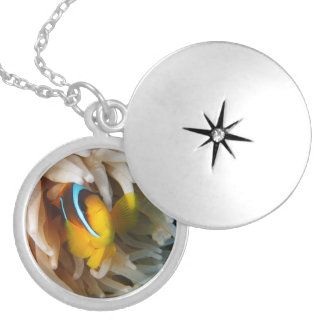 Orange Clown Fish Locket Necklace