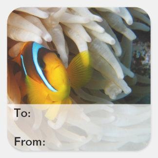 Orange Clown Fish Square Stickers