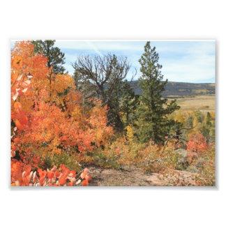 Orange Colorado Aspen Photo Print