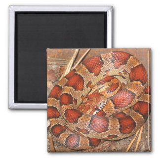 Orange Corn Snake Magnet - Animal Series