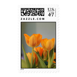 Orange Creamcycle Tulips, postage stamps