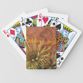 Orange cup coral bicycle playing cards