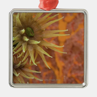 Orange cup coral christmas ornament