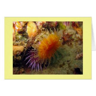 Orange Cup Coral Greeting Card