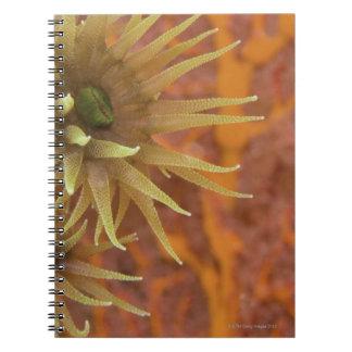 Orange cup coral notebook