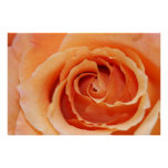 Orange Cut Rose on Canvas Print