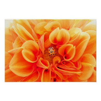 Orange Dahlia and Ladybug Poster