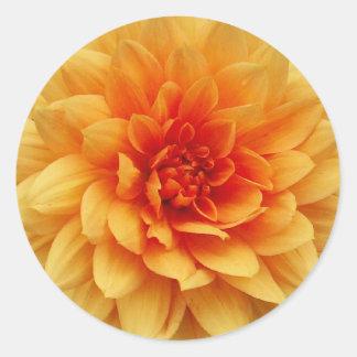 Orange Dahlia Classic Round Sticker