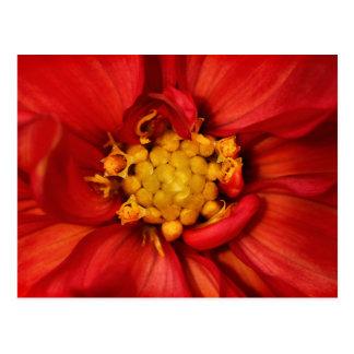 Orange Dahlia Flower Postcard