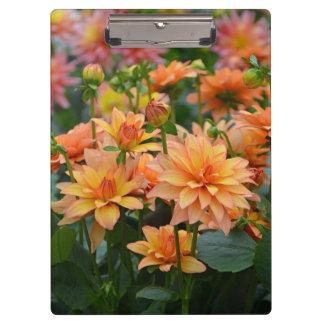 Orange dahlia flowers print clipboard