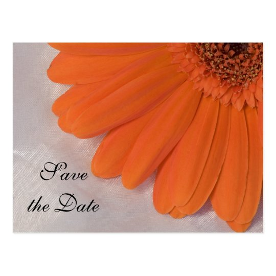 Orange Daisy and White Satin Wedding Save the Date Postcard