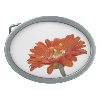 Orange Daisy Gerbera Flower Belt Buckles