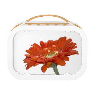 Orange Daisy Gerbera Flower Lunch Box