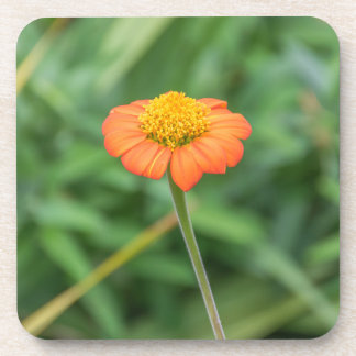 Orange daisy hard plastic coasters