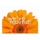 Orange Daisy New Address Postcard