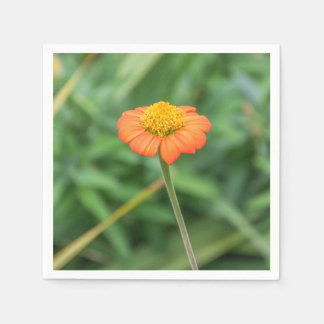 Orange daisy paper napkins