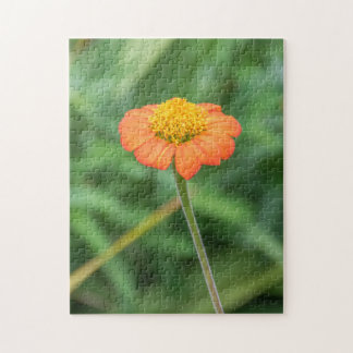 Orange daisy photo puzzle