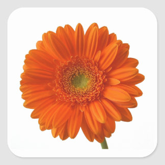 Orange Daisy Stickers