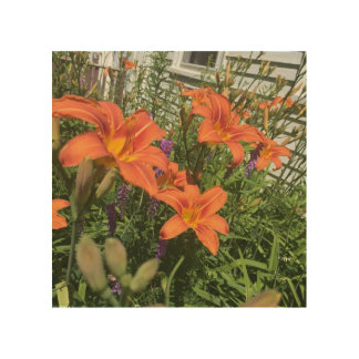 Orange Day Lilies at the Farm - Frost Hill Farms Wood Canvas