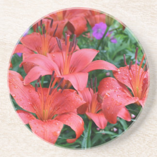 Orange Day Lilies Floral Coaster