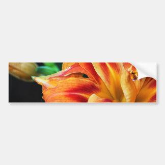Orange Day Lily Bumper Sticker