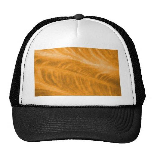 Orange Elephant Ear Texture Hats