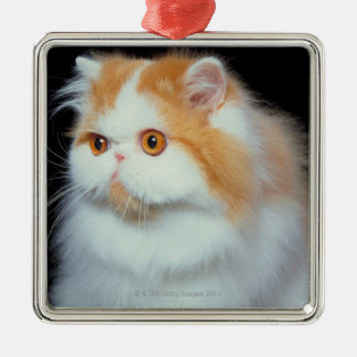 Orange Eyed and Cute Cat Christmas Ornament