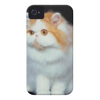 Orange Eyed and Cute Cat iPhone 4 Case