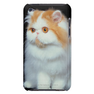 Orange Eyed and Cute Cat iPod Case-Mate Case