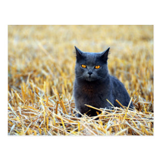 Orange-Eyed Black Cat in Field Postcard