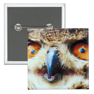 Orange Eyed Owl 15 Cm Square Badge