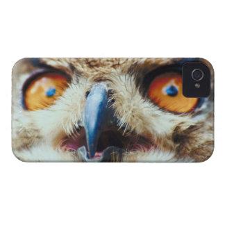 Orange Eyed Owl iPhone 4 Cases