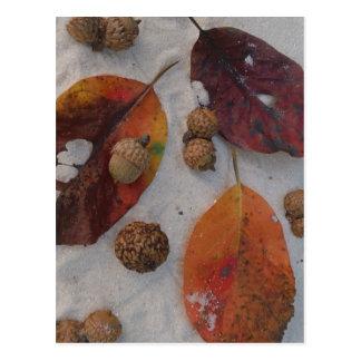 Orange fall leaves and acorns post card