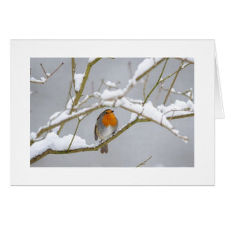 Orange Finch In The Snow Card