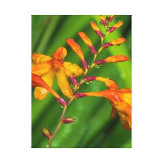 Orange flower after the rain canvas print