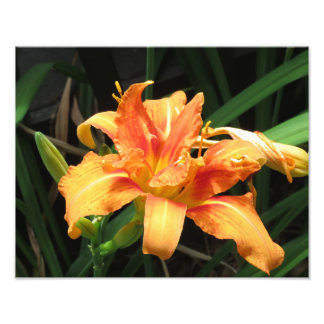 Orange Flower Bloom Floral Photography Photo
