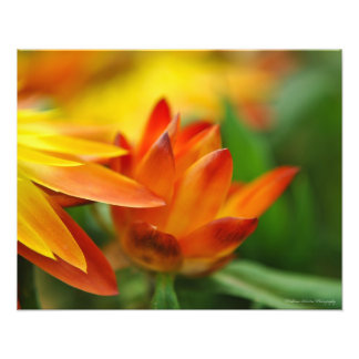 Orange Flower Bud in the Evening Sun Photographic Print