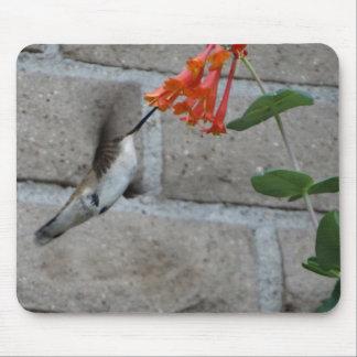 Orange flower Hummingbird Mousepad