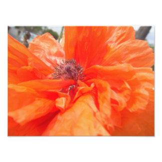 Orange Flower Photo Print