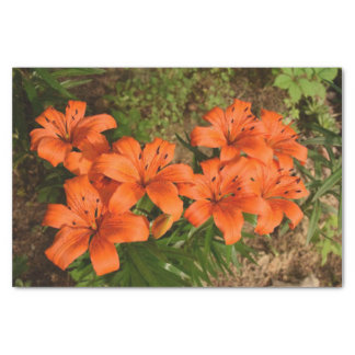 Orange Flower Tissue Paper