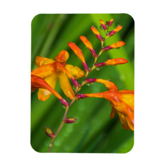 Orange flowers after the rain fridge magnet
