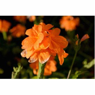 orange flowers close up floral image cut out