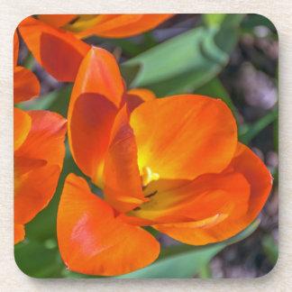 Orange flowers hard plastic coasters
