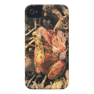 Orange Frog iPhone 4/4S Case-Mate Barely There