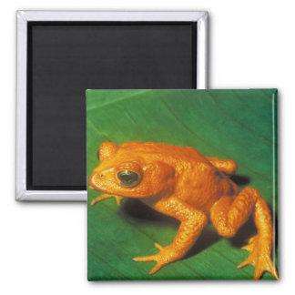 Orange Frog Magnet